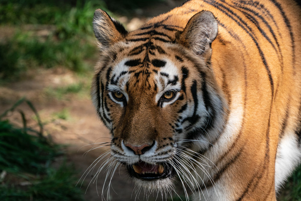 washington-zoo